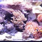 Aquarium Dez 2013