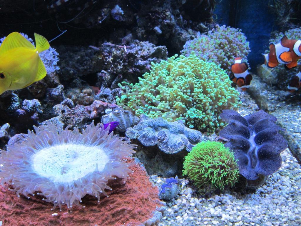 Womens Koralle 012-1