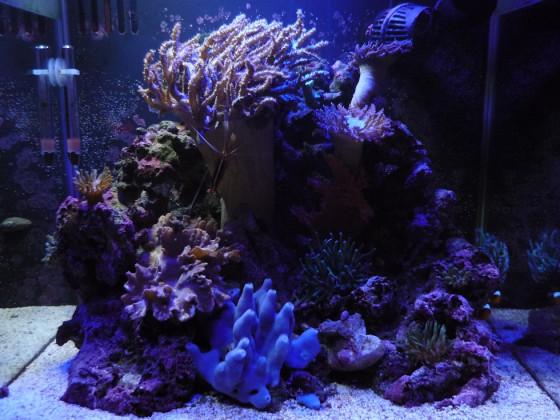 Fluval Reef M40
