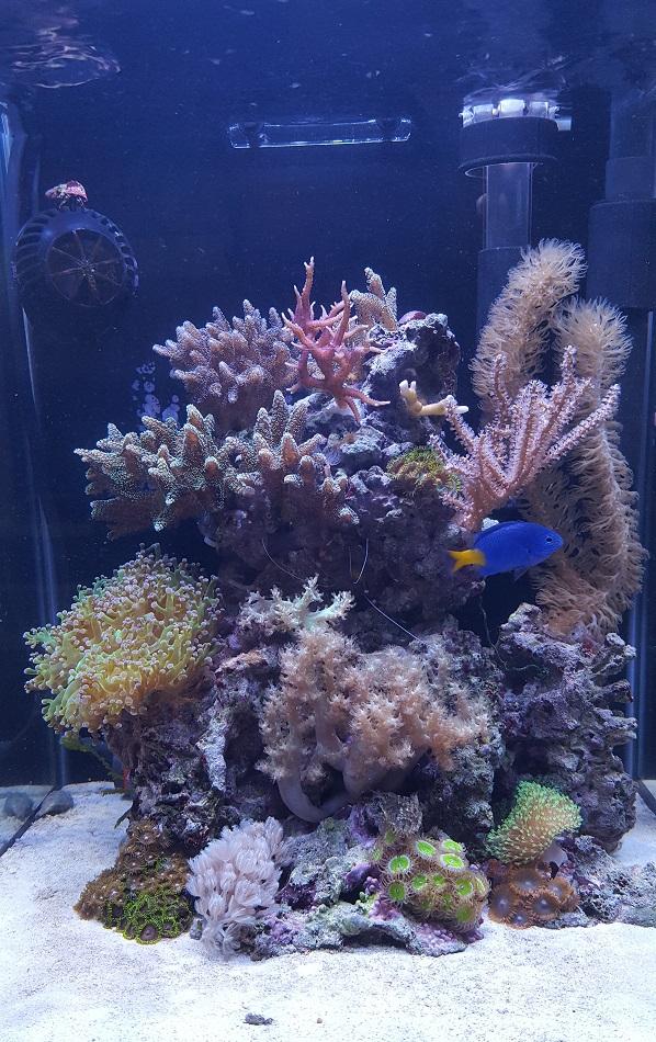 Übersicht meiner bisherigen und dem aktuellen Aquarium